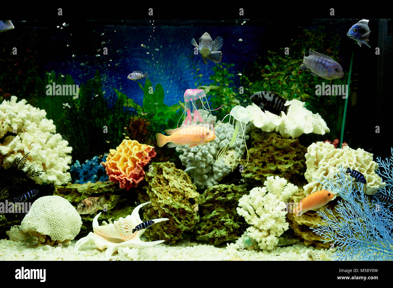 fish in the aquarium, blue water.Dreams of the sea. Relax at home - Stock Image