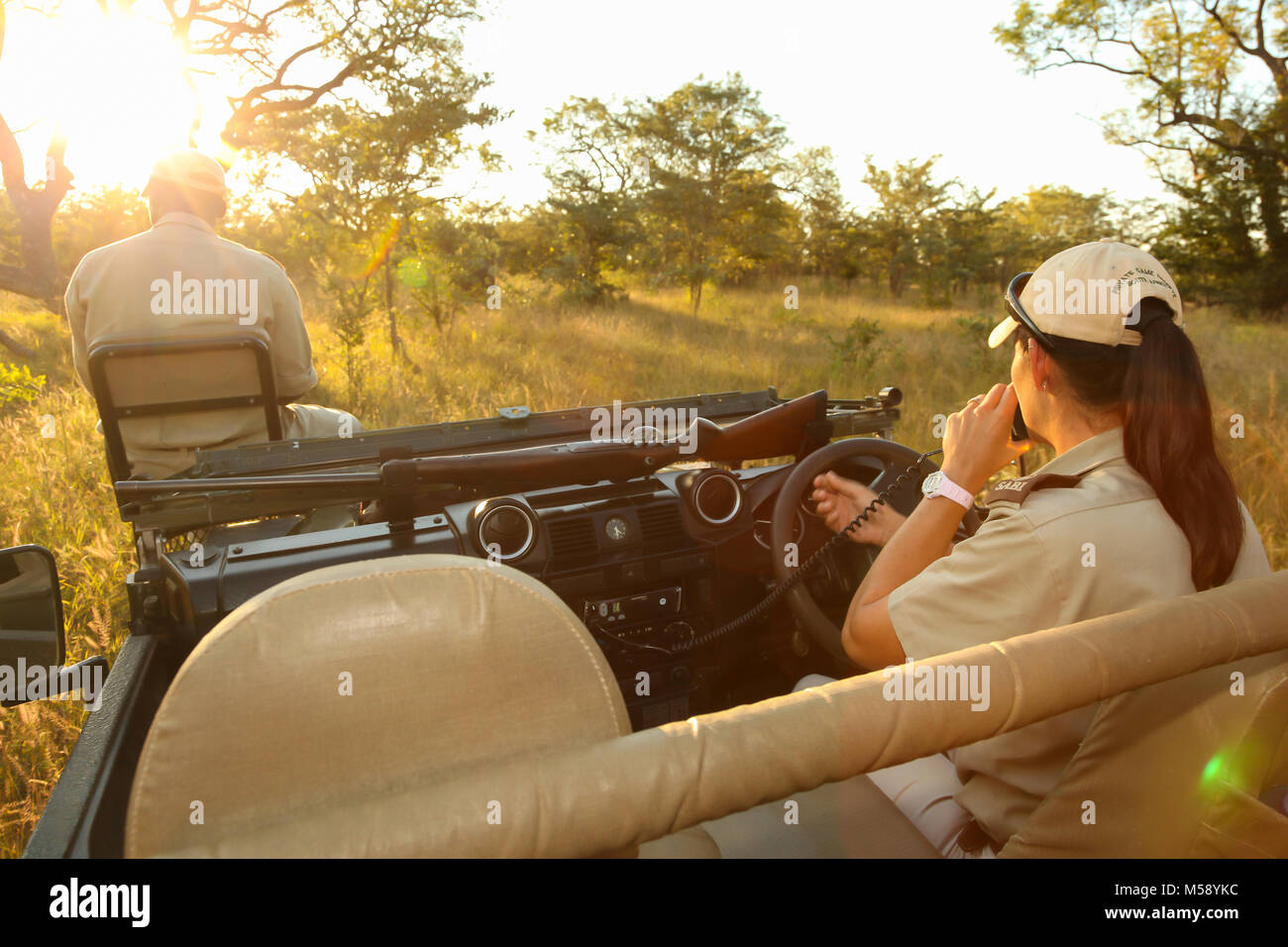 Tracker and Safari guide on a 4x4 in a South African game reserve - Stock Image