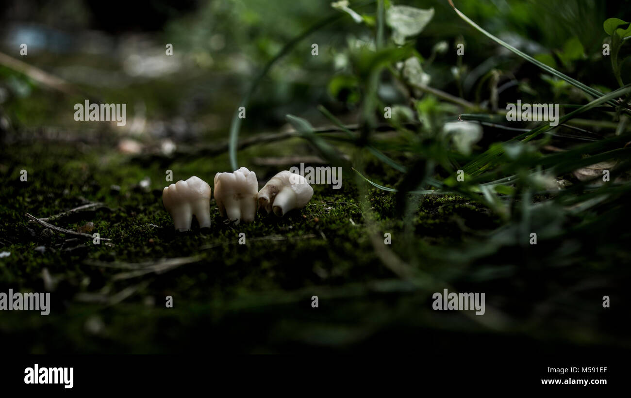 Teeth in the woods - Stock Image