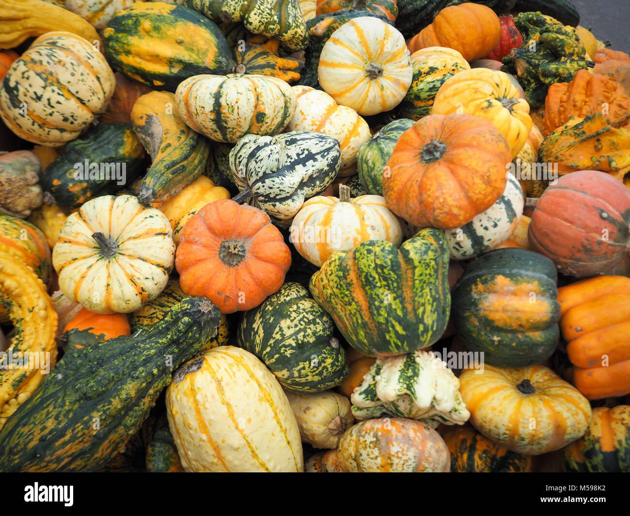 Pumpkins on a pumpkin farm. Autumn is here! - Stock Image