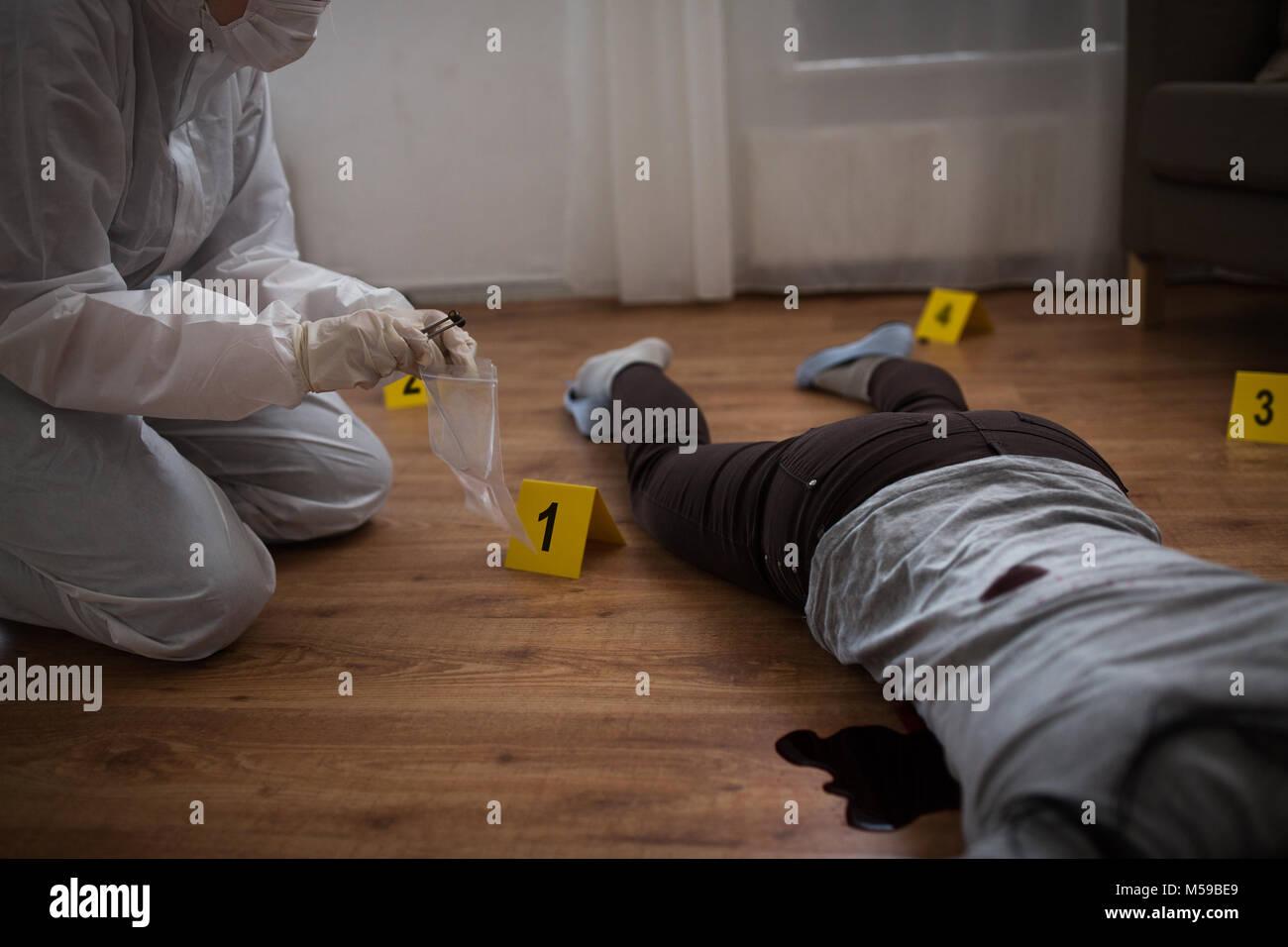 criminalist collecting crime scene evidence - Stock Image