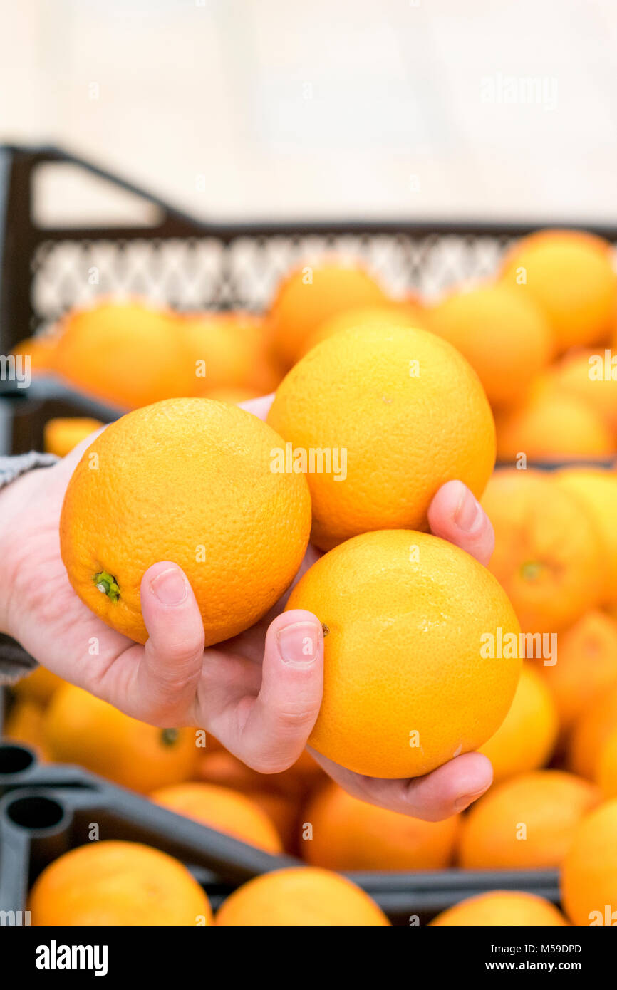 A woman's hand with three oranges. - Stock Image