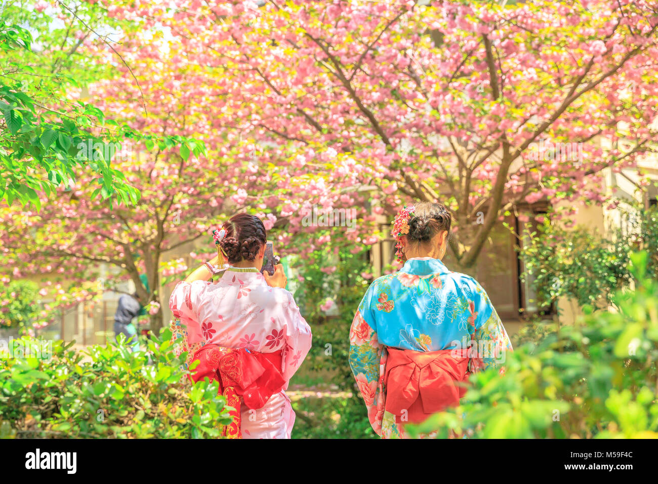 Asian women in traditional kimono take photo of cherry blossom trees along Philosopher's walk during Sakura, - Stock Image