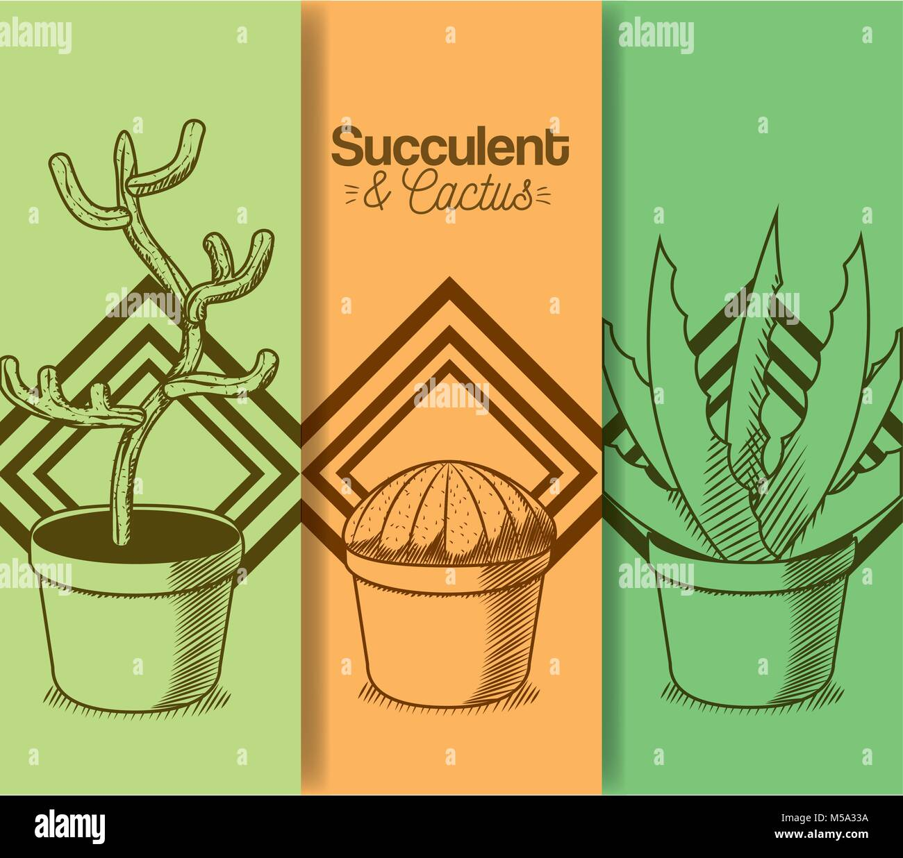 Succulent and cactus desert plants - Stock Image