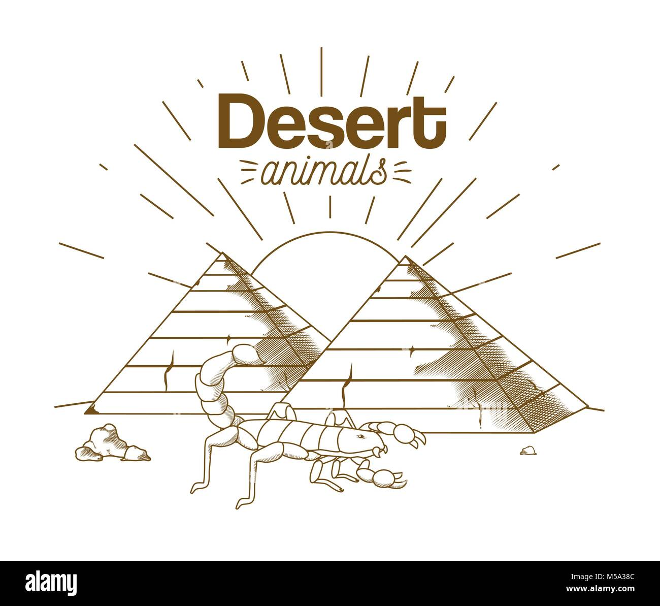 Desert Scorpion Stock Vector Images Alamy