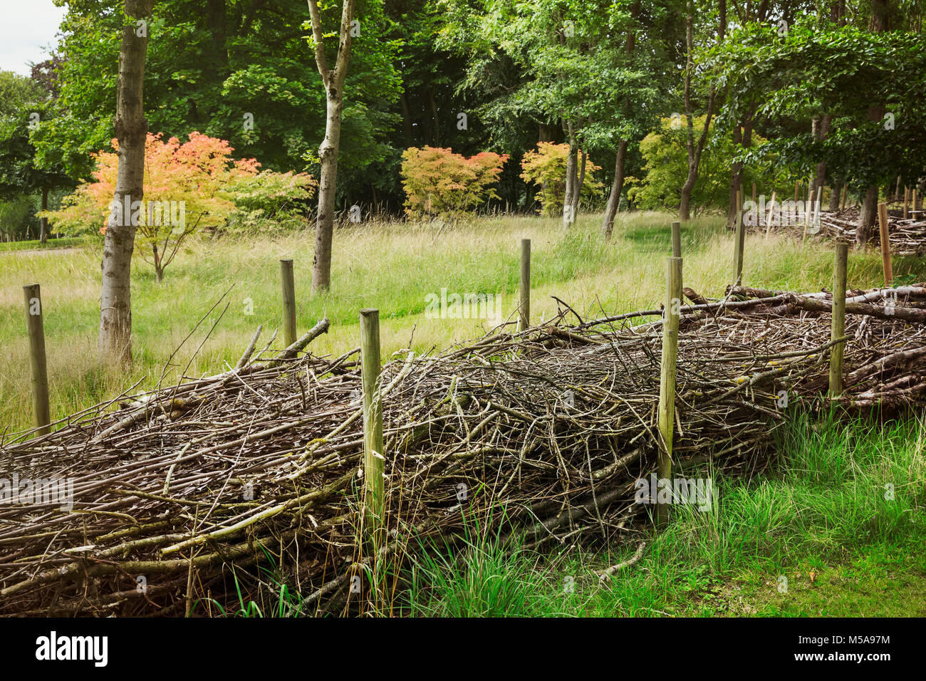 Layers of willow branches in between wooden poles, hiberation zones for wildlife in winterm and wind shields for Stock Photo