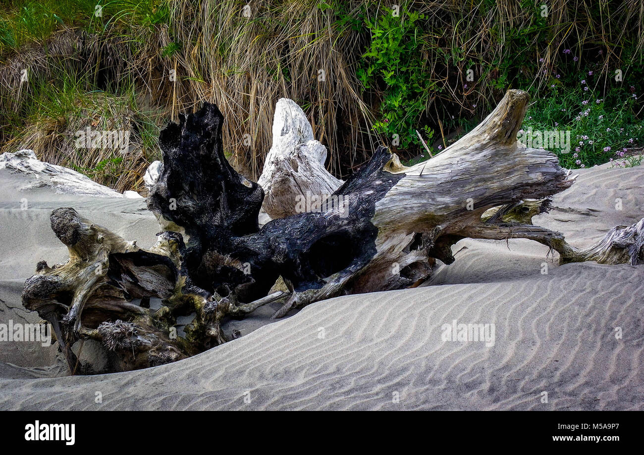 Driftwood peaceful laying on the beach - Stock Image