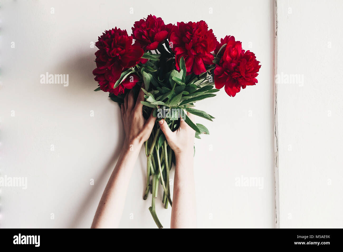 Hands Holding Beautiful Red Peonies Bouquet On Rustic White Stock Photo Alamy