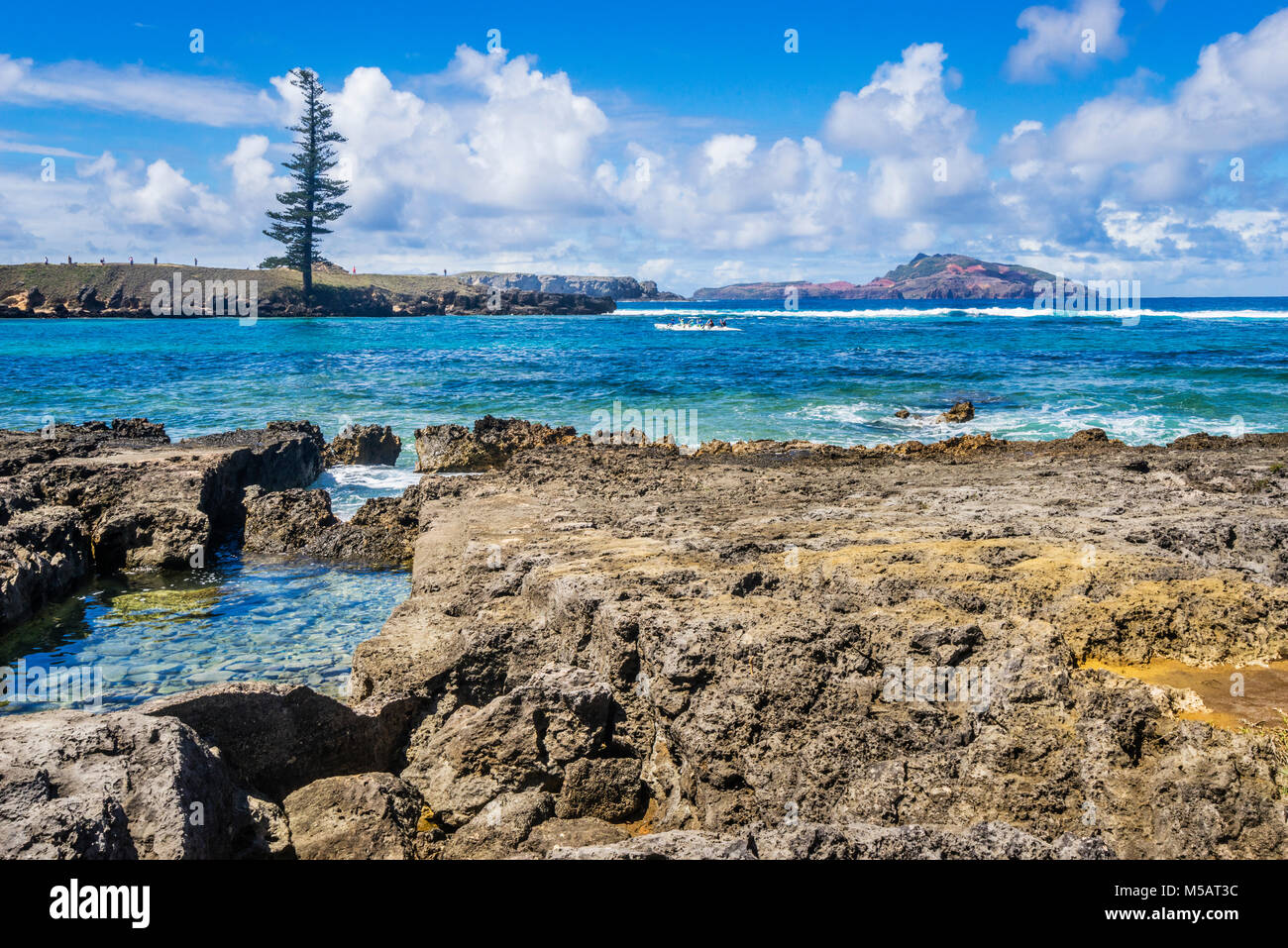 Norfolk Island, Australian external territory, view of Point Hunter and the lone pine - Stock Image