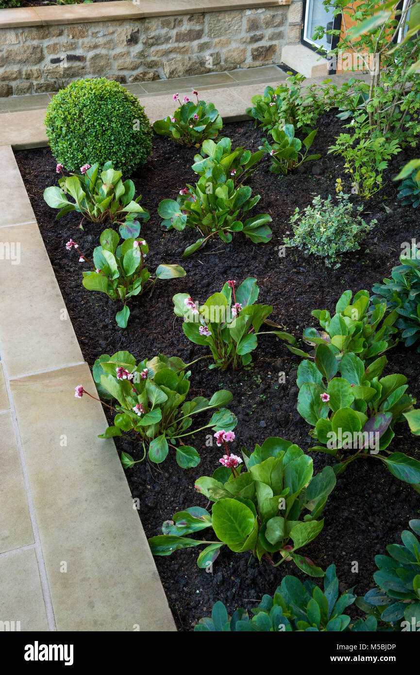 Small corner of beautiful, landscaped, private garden with contemporary design, paved patio, shrubs & plants on Stock Photo