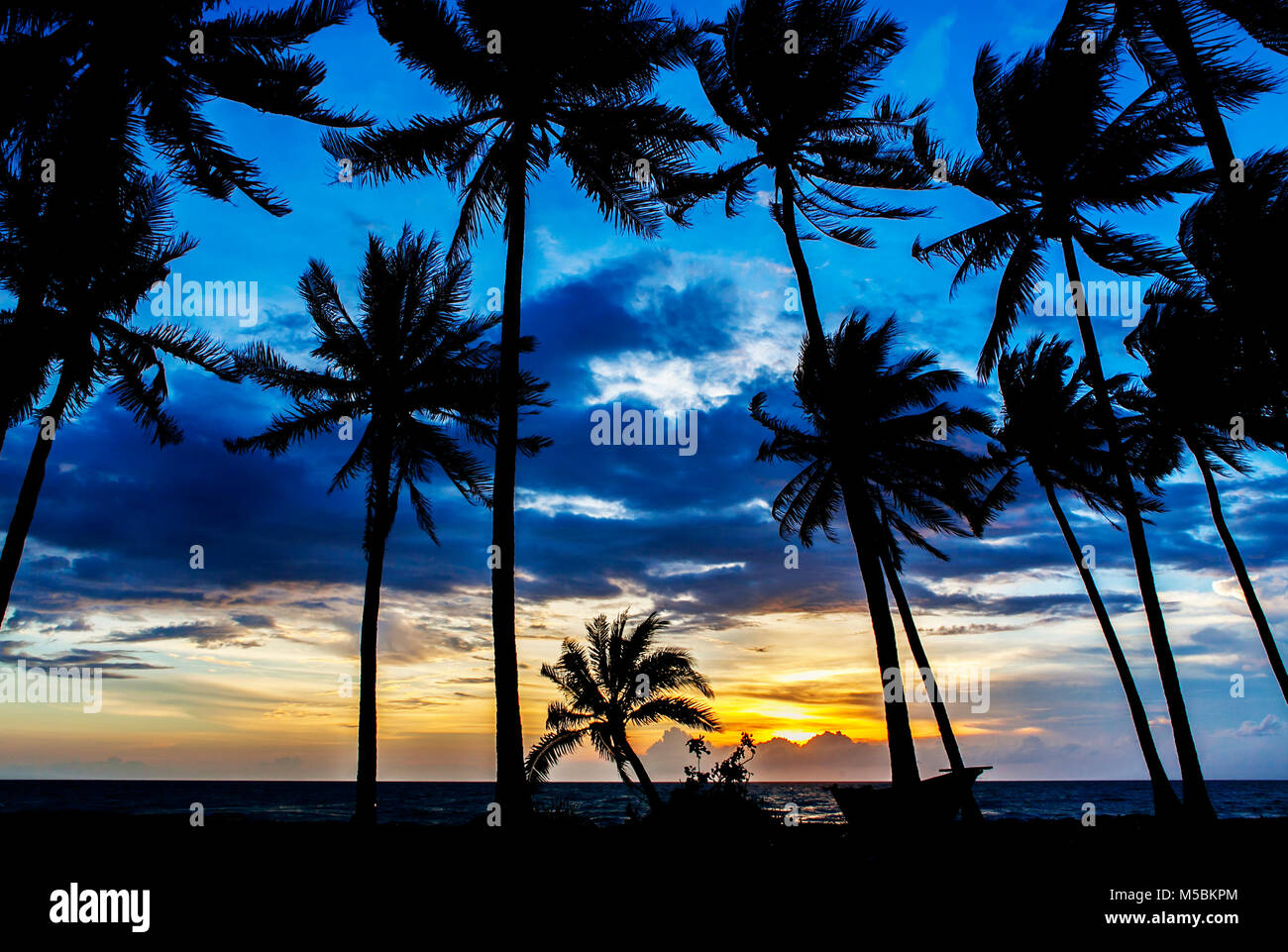 Sunset, Silhouette of Coconut tree on Trường beach,  Long Beach. Phu Quoc island, Kien Giang, Vietnam. - Stock Image