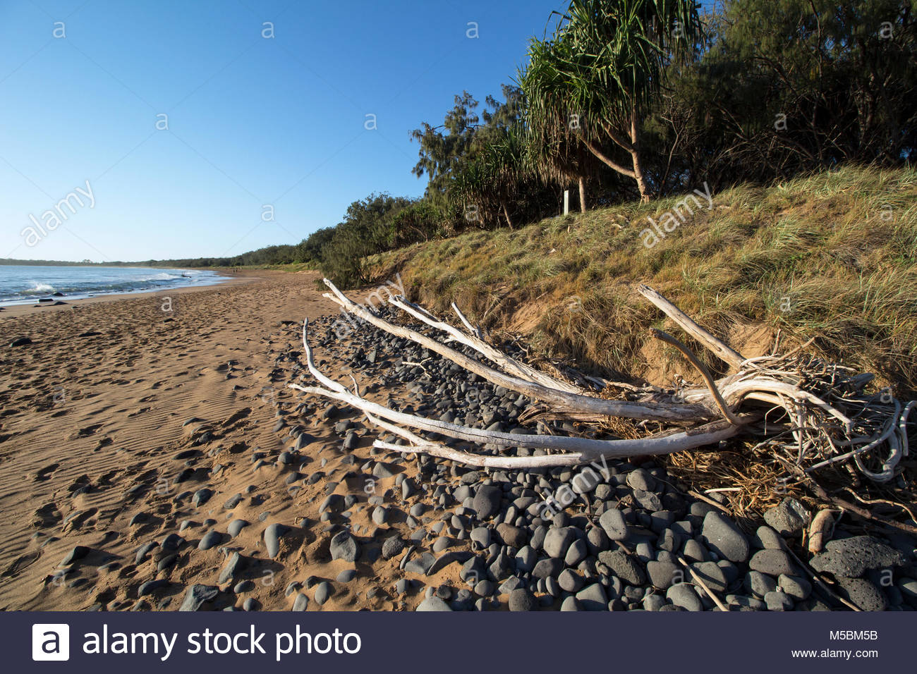 Mon Repos Beach in Queensland, Australia. Showing a driftwood log and rocks in the morning light. - Stock Image