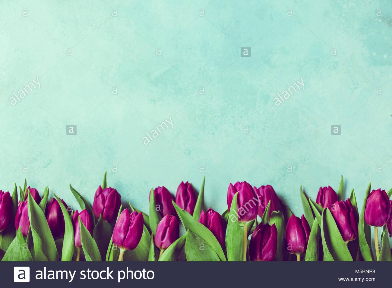 Purple tulips border fresh spring flowers on rustic blue background purple tulips border fresh spring flowers on rustic blue background with copy space mightylinksfo