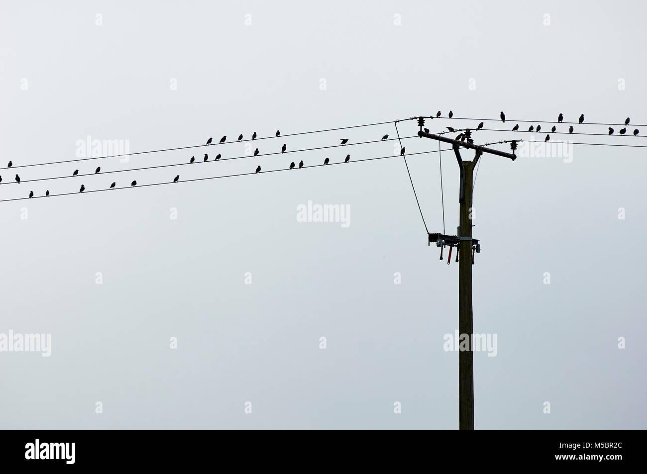 Vogelgruppe macht Pause - Stock Image