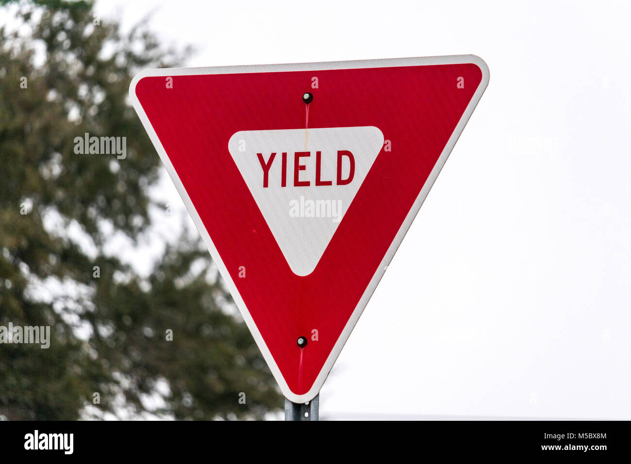 A yield sign - Stock Image