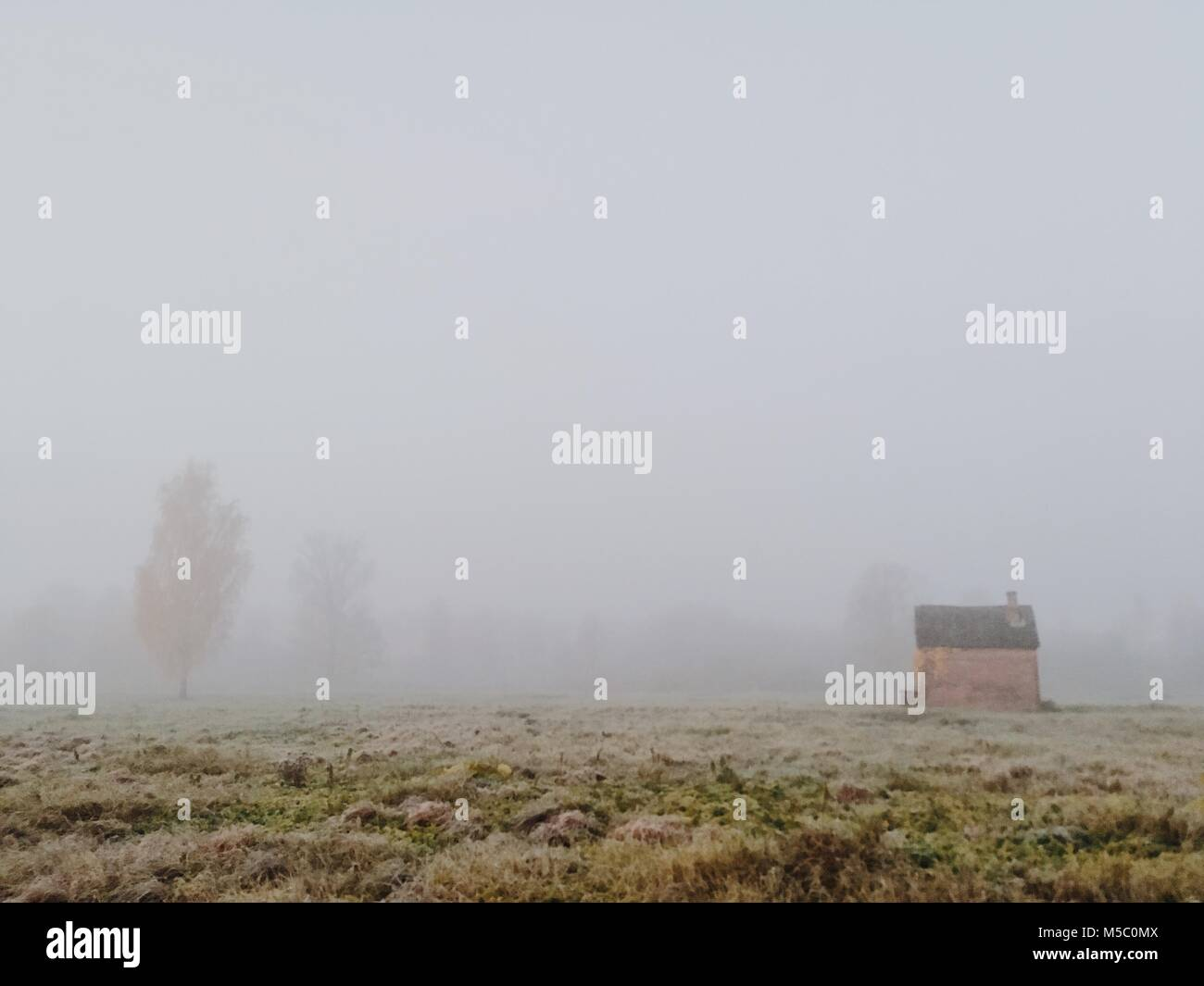 Grass field. Beautiful foggy morning scene with a little shed. - Stock Image