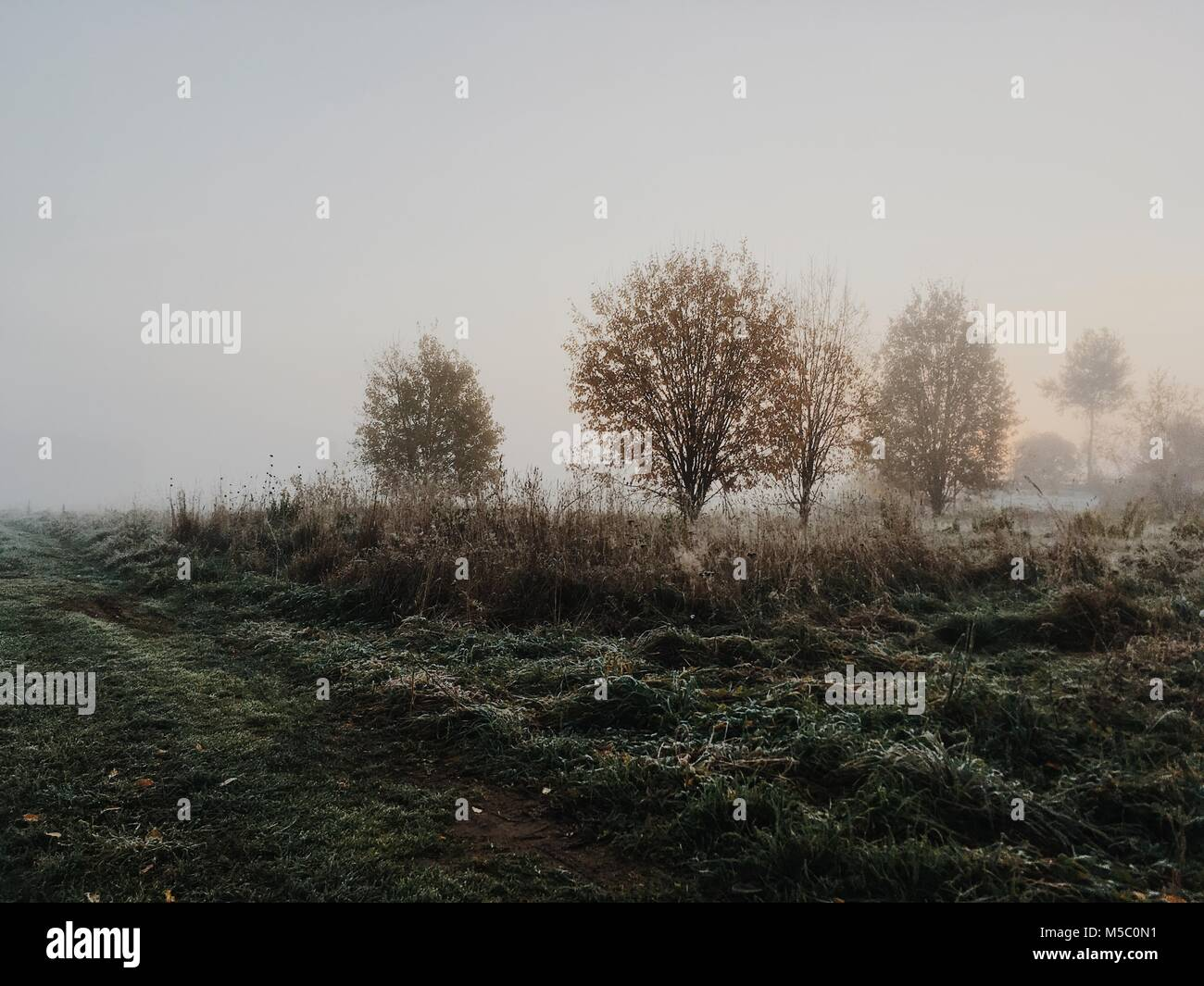 Golden-foggy morning in the manor park. - Stock Image