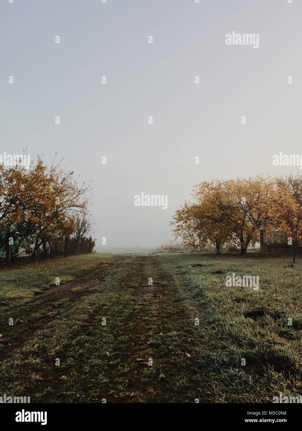 Road to nowhere. Golden-foggy morning in the manor park. - Stock Image