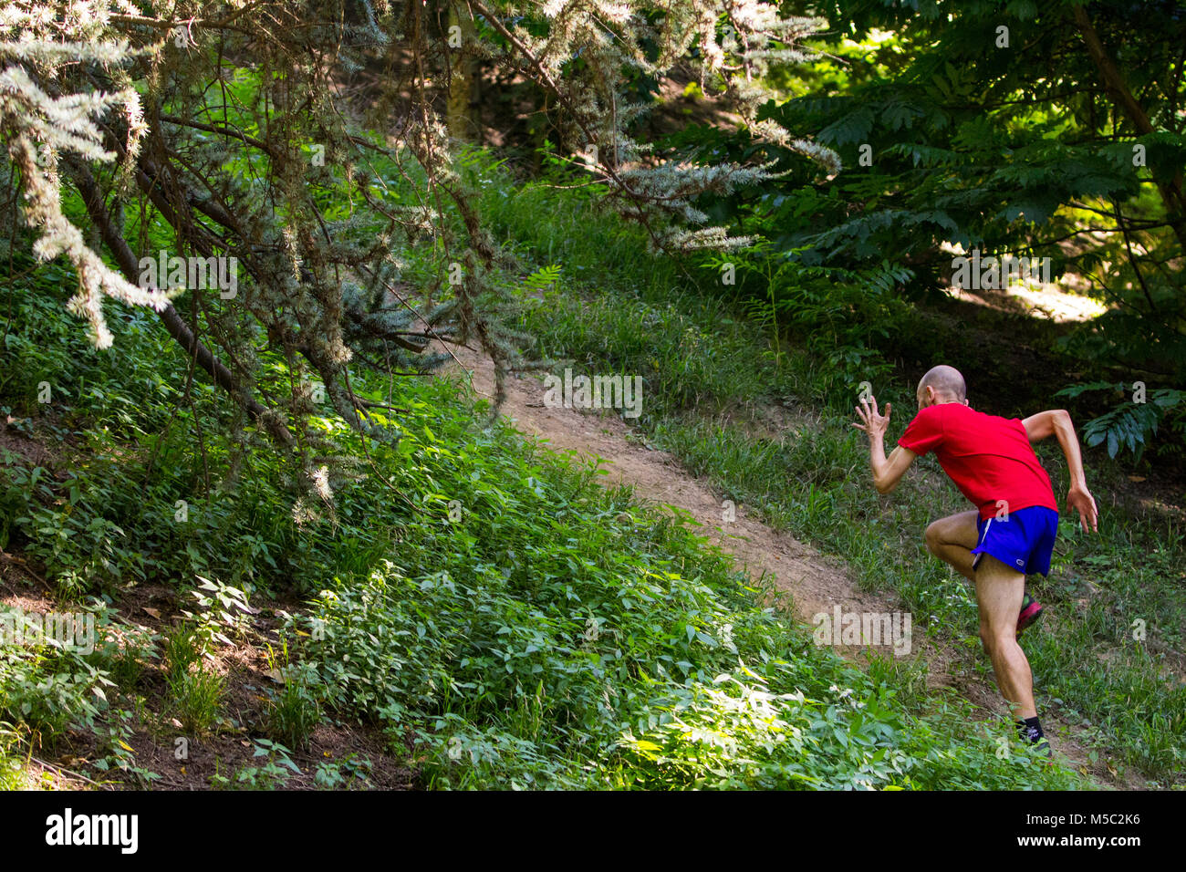 Boy training in the forest in a trail-running session Stock Photo - Alamy