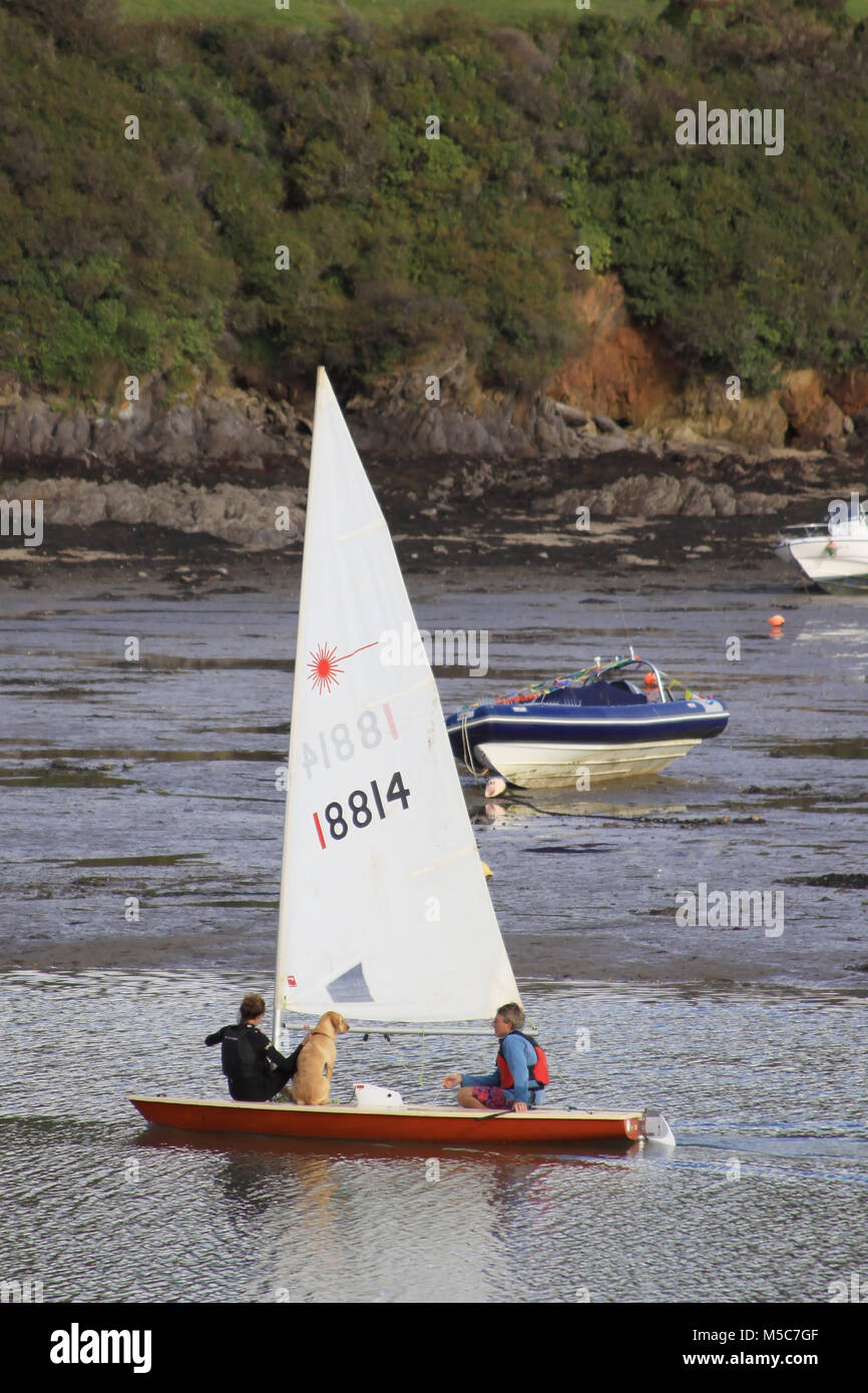 Sailing Boat with a Dog in the Kingsbridge Estuary Salcombe, Devon, England - Stock Image