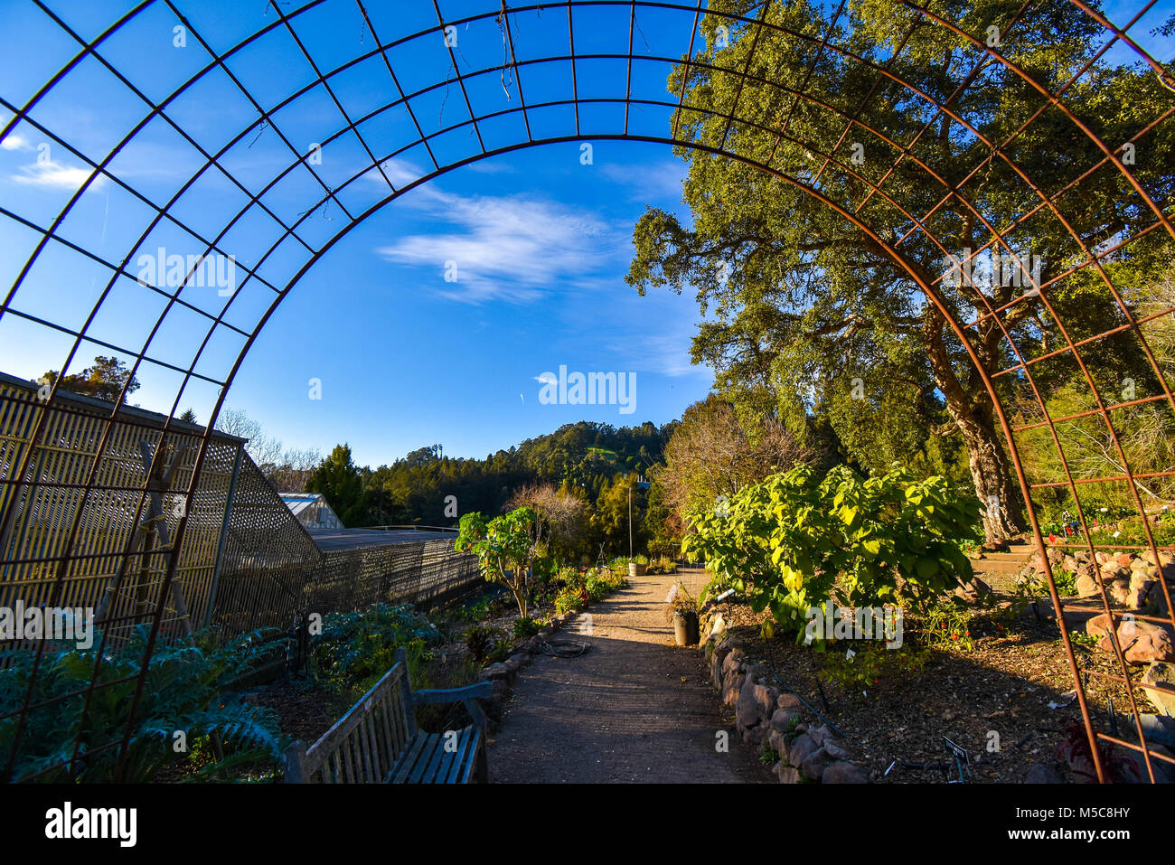 A gateway leads into a section of UC Berkeley's stunning Botanical Garden on a sunny spring day. - Stock Image