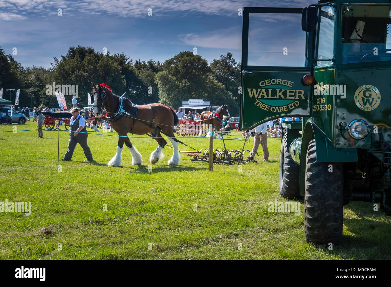 Demonstration of draught horses at Leicestershire Countryside Show. - Stock Image