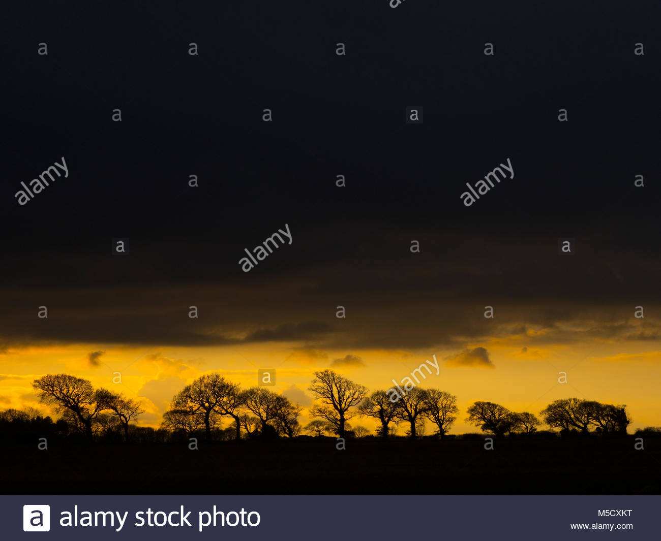 Arable farmland and Oaks Southrepps Norfolk at dusk - Stock Image