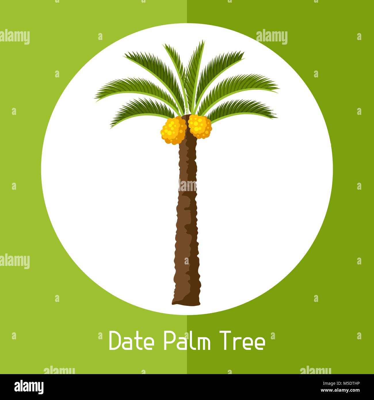 Date palm tree. Illustration of exotic tropical plant - Stock Vector