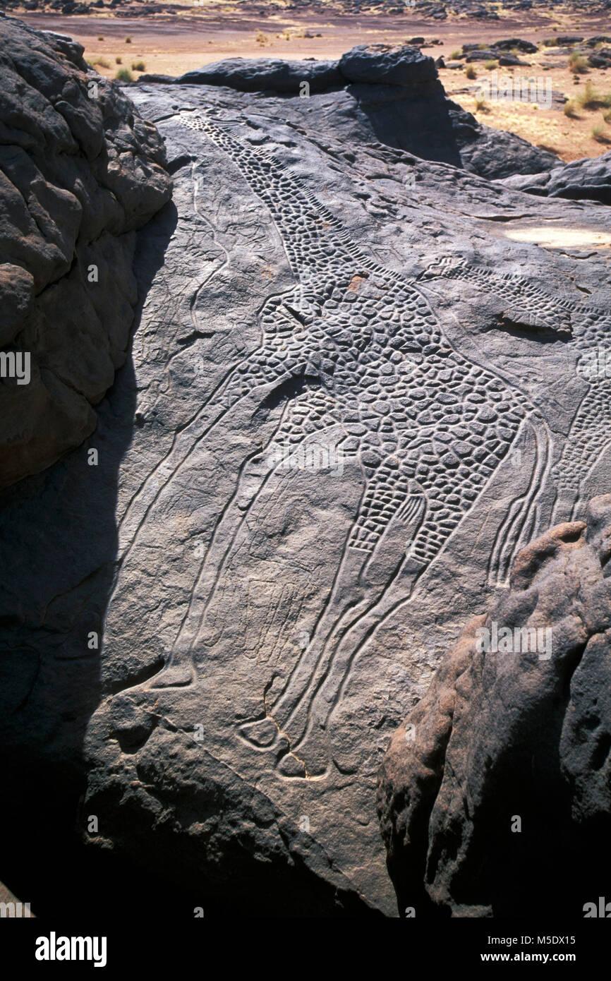 Niger. Agadez. Sahara desert. Sahel, Tenere desert. Prehistoric engravings. Giraffe. Unesco, World Heritage Site. - Stock Image
