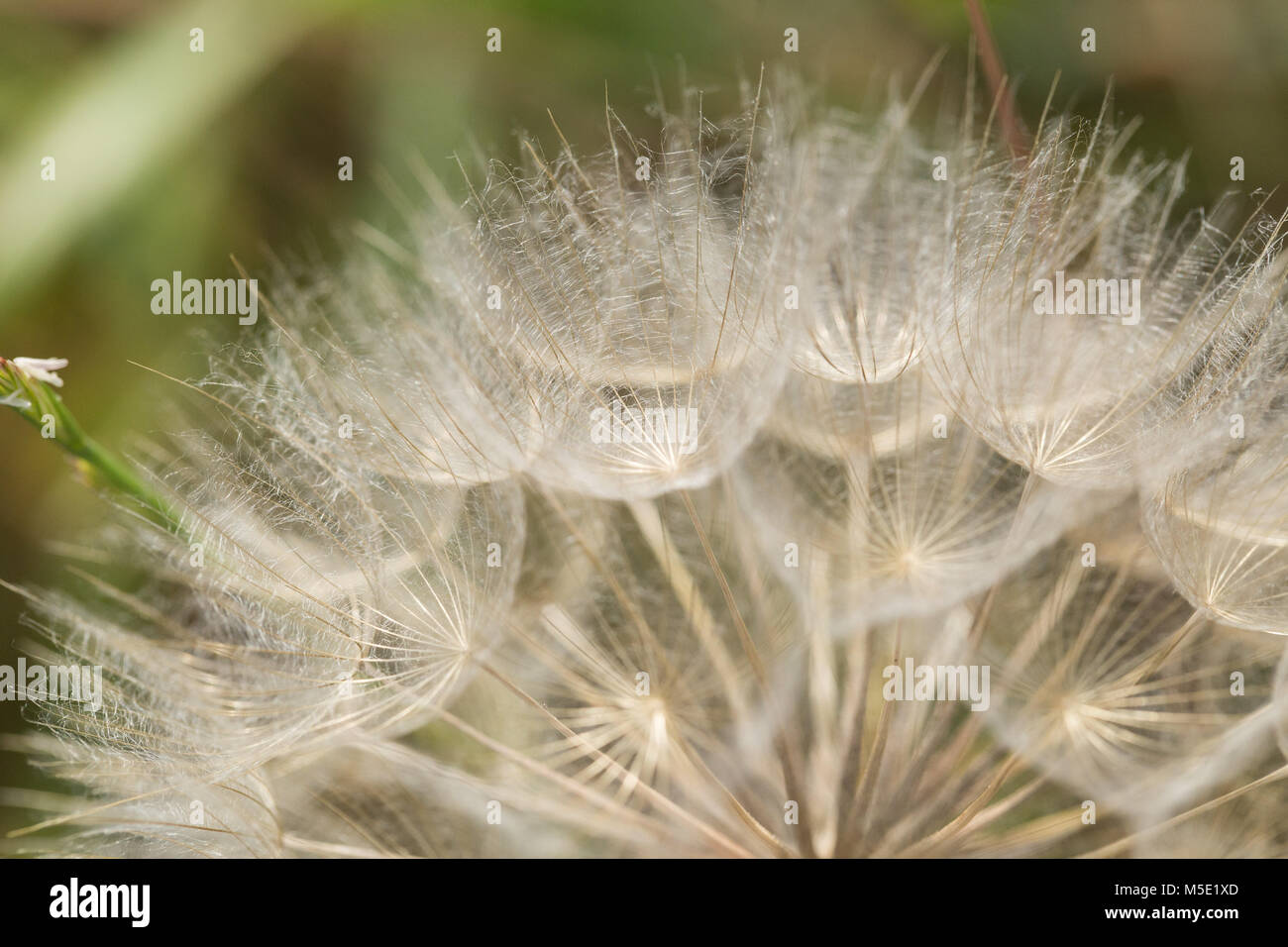 wind, beautiful, natural, beauty, season, macro, meadow, flower, nature, summer, plant, abstract, evening, shine, - Stock Image