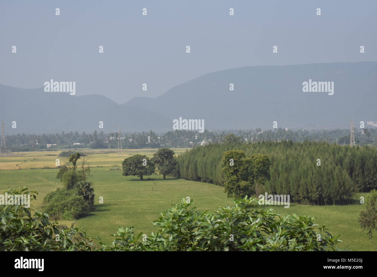 awesome scenery of grass field with casuarina trees. - Stock Image
