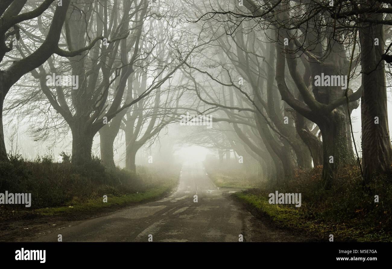 Dark, Misty Road in Somerset - Stock Image