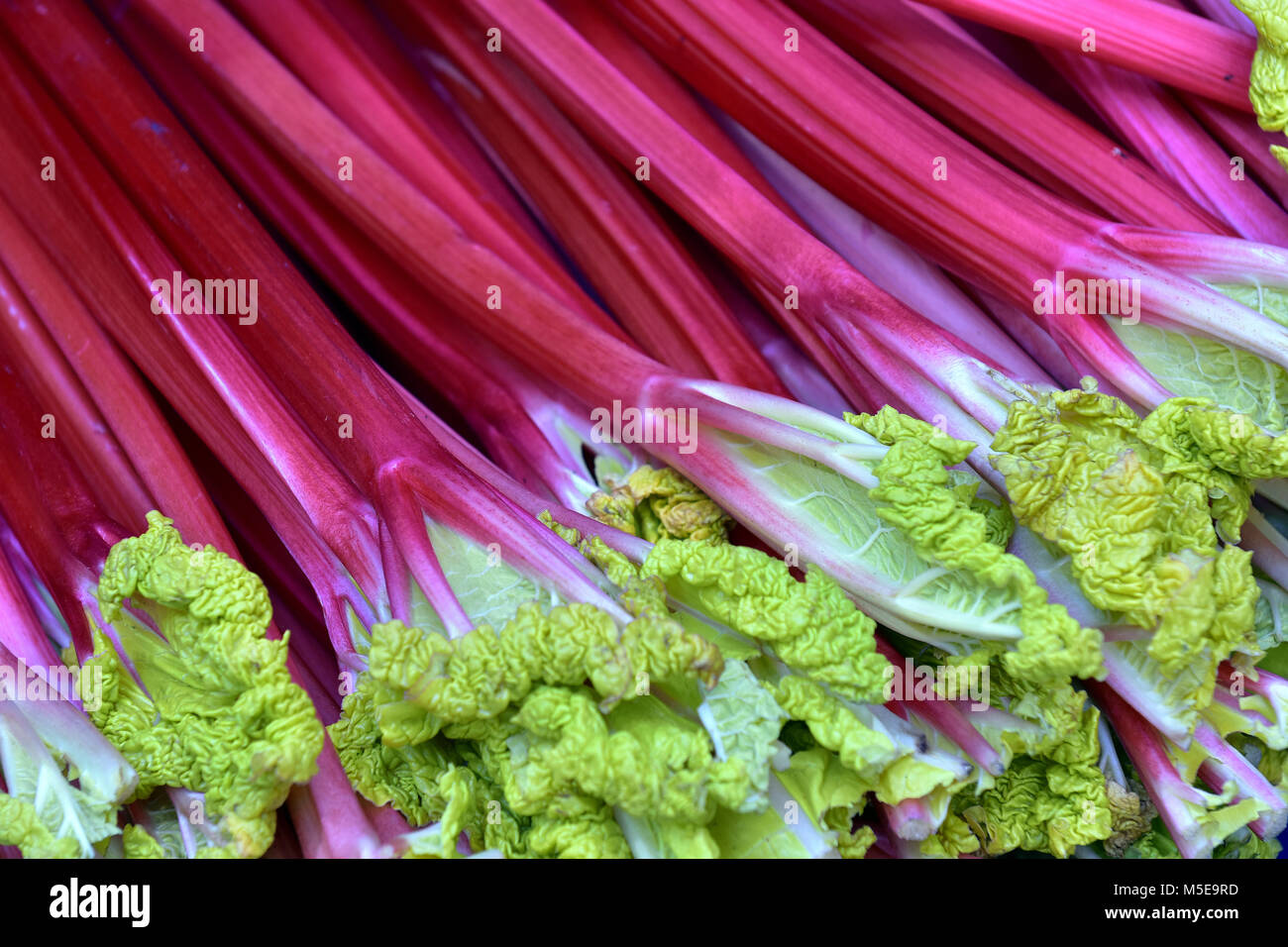 fresh rhubarb on display at a greengrocers fruit and vegetables stall at borough market in central london. Rhubarb Stock Photo
