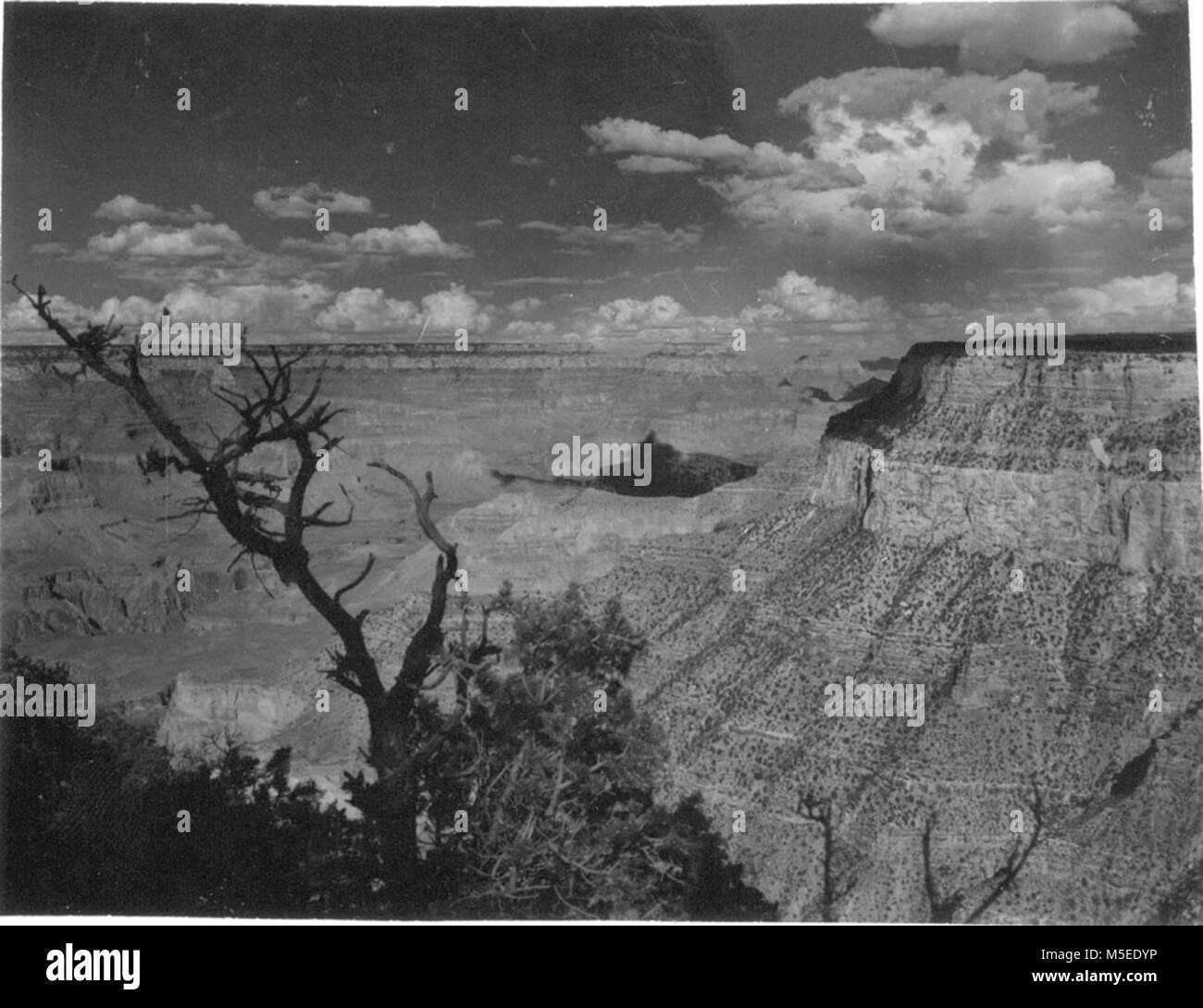 Grand Canyon HistoricTrail View  LOOKING EAST FROM NEAR TRAILVIEW, WEST RIM DRIVE.    CIRCA 1954.  . Stock Photo