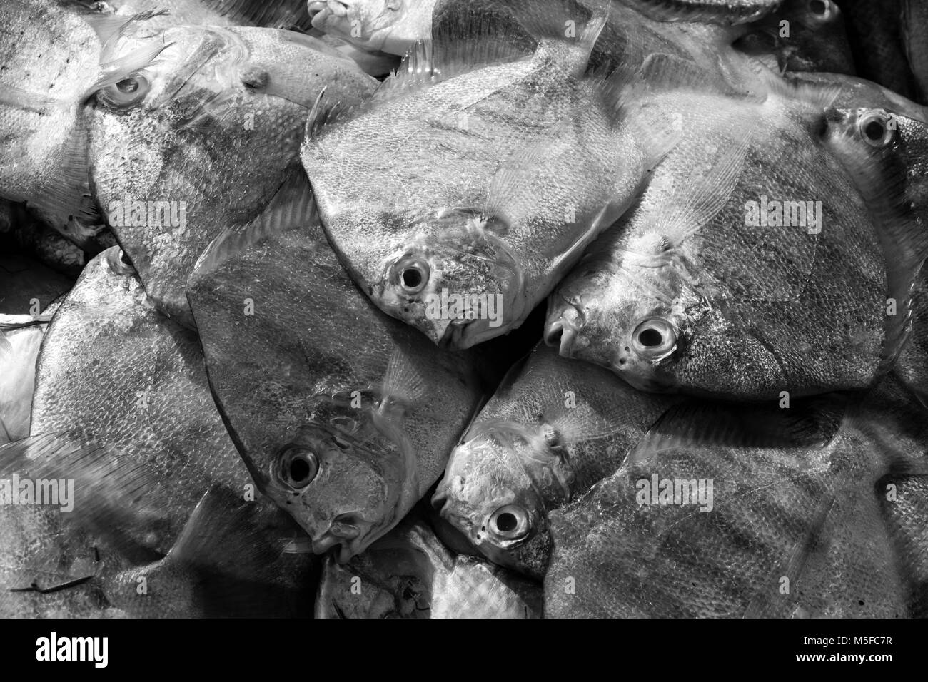 Closeup of fish on a market in Malaysia - Stock Image