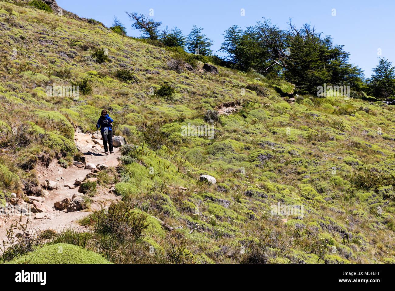 Trekker on trail; Cordon Gorra Blanca mountains north of El Chalten; Patagonia; Argentina - Stock Image