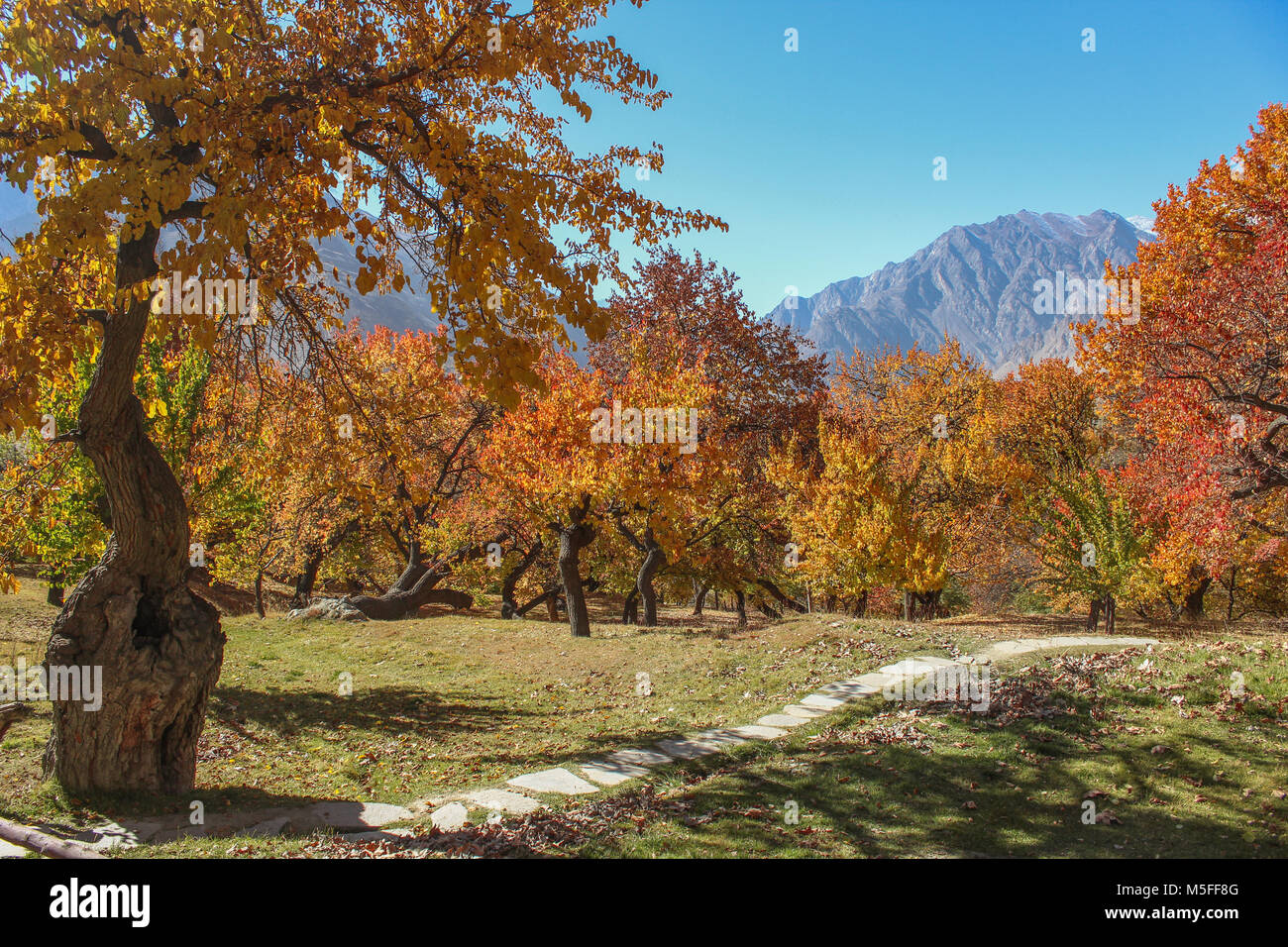 Royal garden in autumn. Altit fort, Hunza Pakistan. - Stock Image