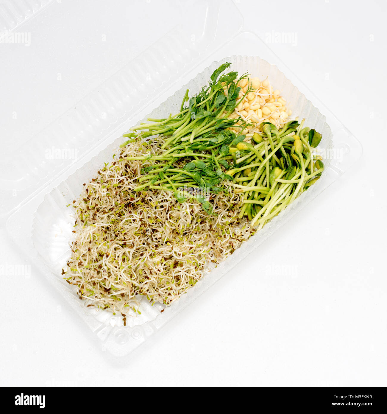 Different types of micro greens in plastic container on white background. Healthy eating concept of fresh garden Stock Photo