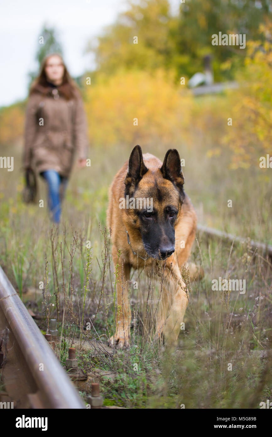 Attractive young woman walking with her dog German shepherd at autumn forest, near rail way - pet is in focus - Stock Image