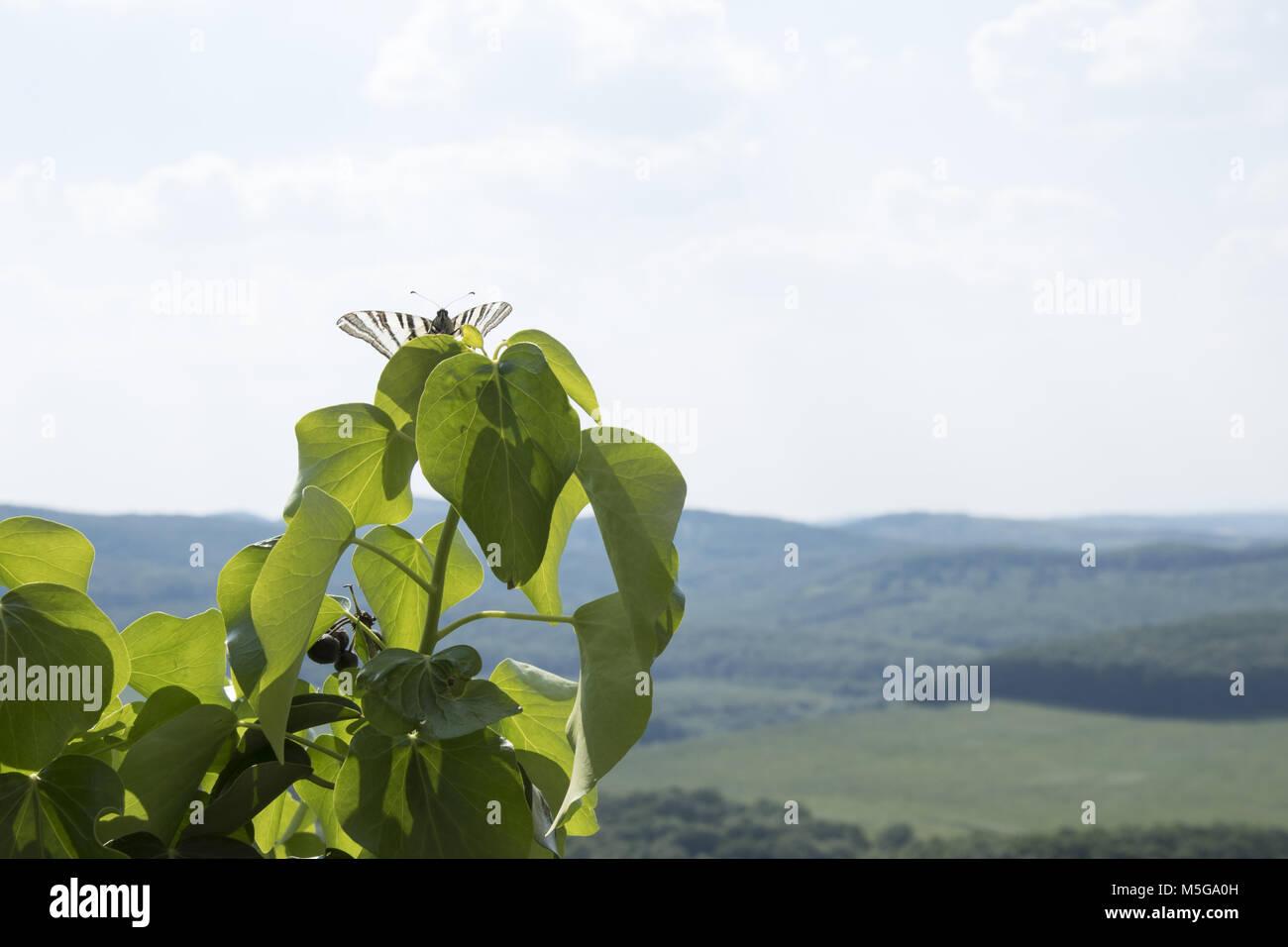 near Hollókő, Hungary - Stock Image