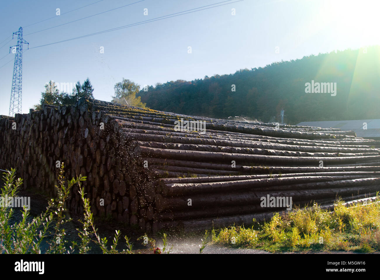Water pile of logs (stack of logs, log deck). Sprinkler irrigation as way of preserving wood - creating microclimate - Stock Image