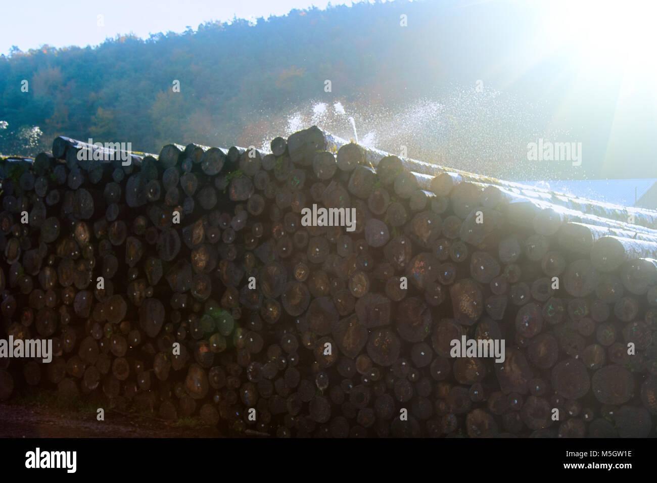 Water pile of logs (stack of logs, log deck). Sprinkler irrigation as way of preserving wood - creating microclimate - Stock Image
