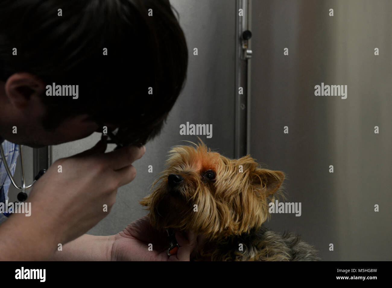 """Dr. Leland Raymond, 20th Medical Group veterinarian, gives """"Stormie"""" her checkup in the vet clinic at Shaw Air Force - Stock Image"""