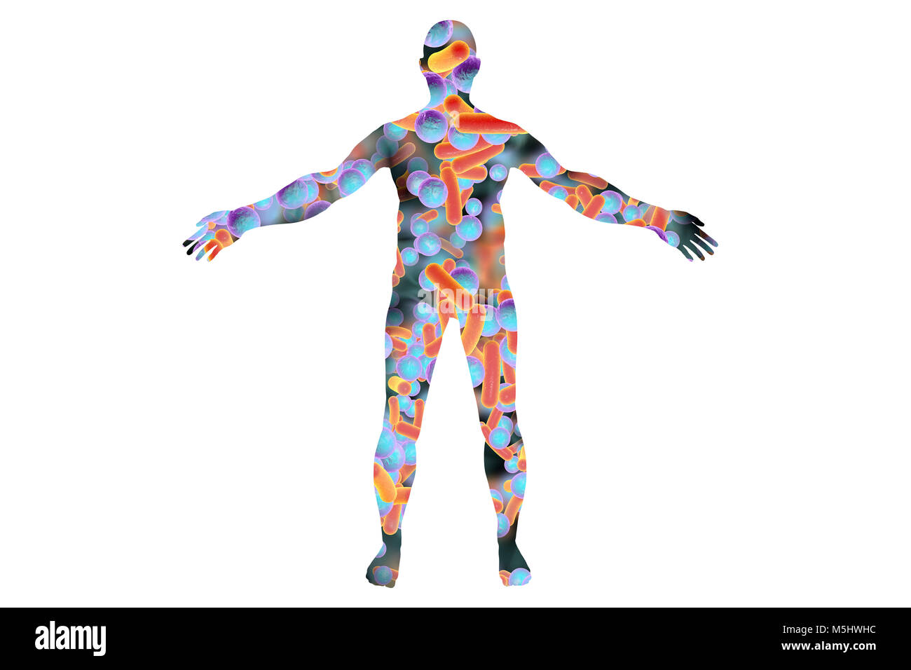Human microbiome, conceptual illustration. Bacteria forming a human body. - Stock Image