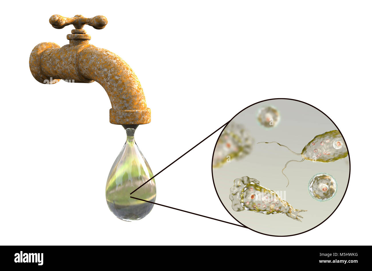 Tap water contaminated with the brain-eating amoeba Naegleria fowleri,computer illustration.This organism is an - Stock Image