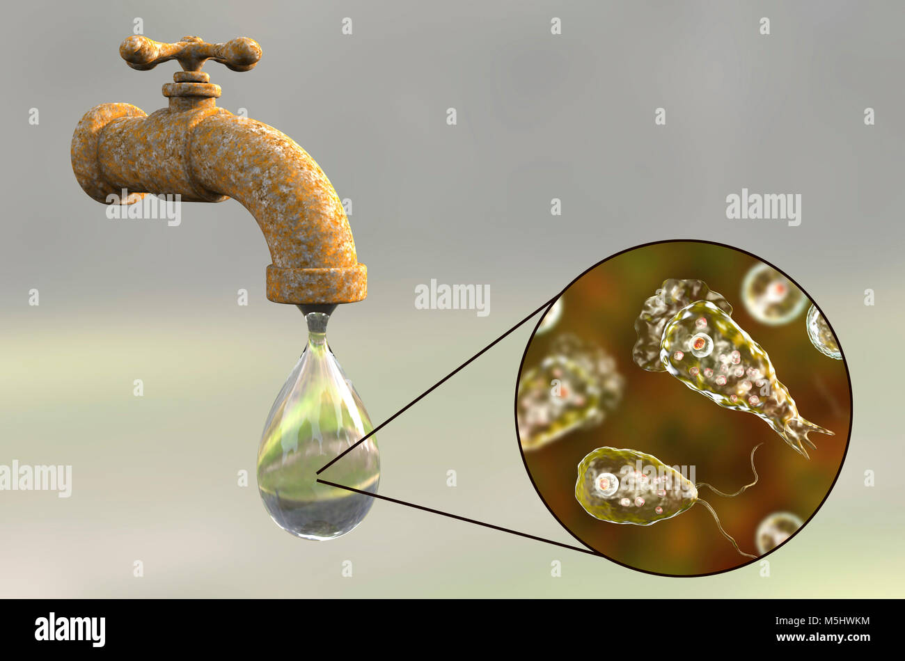 Tap water contaminated with the brain-eating amoeba Naegleria fowleri,computer illustration.This organism is an Stock Photo