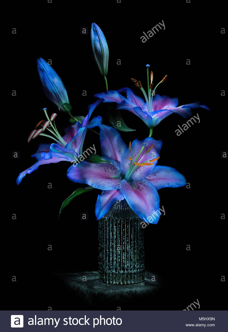 Stargazer Lilies And Buds Stock Photos Stargazer Lilies And Buds