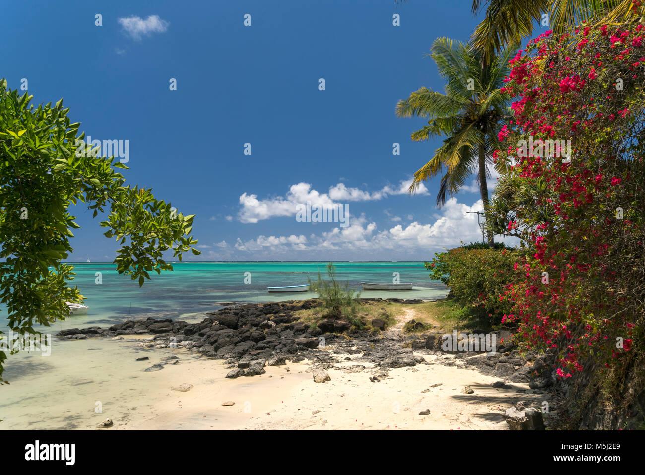 Bougainvillea am Bain Boeuf Public Beach, Cap Malheureux, Riviere du Rempart  Mauritius, Afrika,  | Bougainvillea - Stock Image