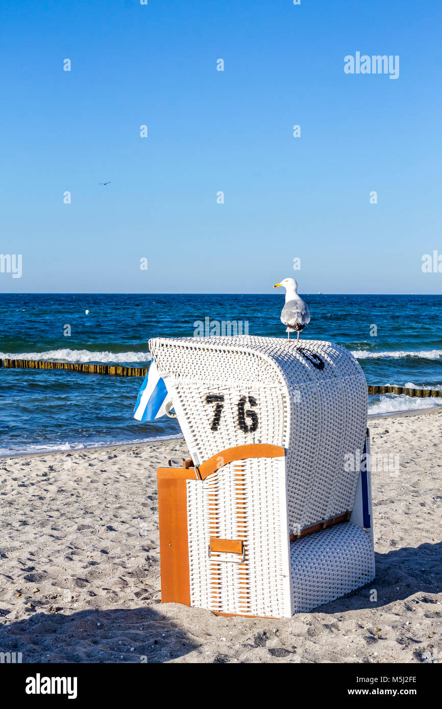 Germany, Mecklenburg-Western Pomerania, Baltic sea seaside resort Kuehlungsborn, hooded beach chair and seagull - Stock Image