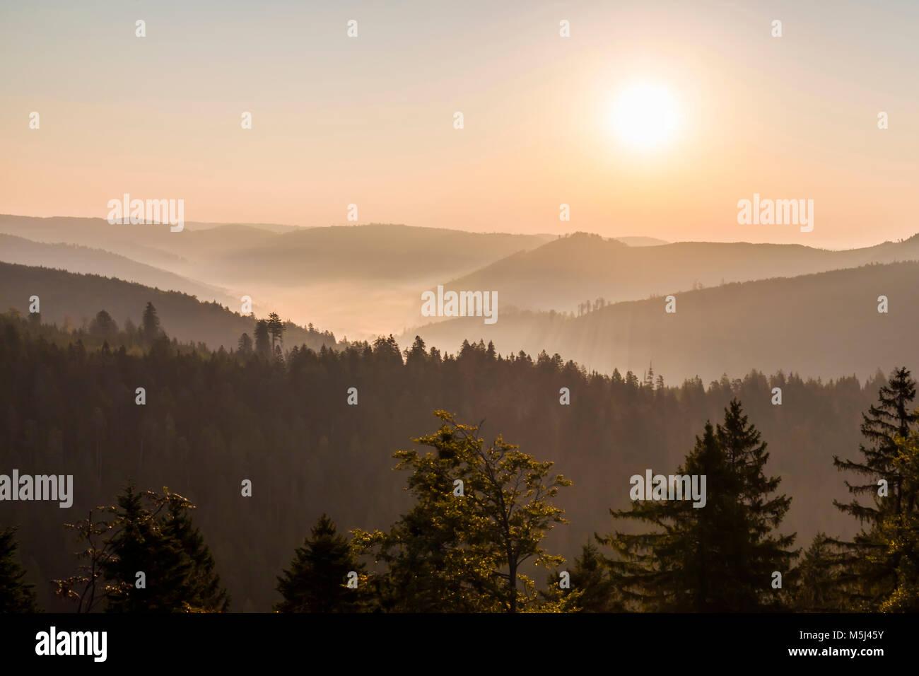 Deutschland, Baden-Württemberg, Schwarzwald, Blick vom Schliffkopf, Tal, Wald, Bäume, Nebel, Morgennebel, - Stock Image